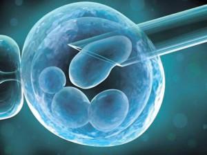 пэ перенос эмбриона